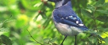 """""""Seekor Burung Saja Dijagai Tuhan, Masa Kamu Gak?"""" Matius 6:26"""