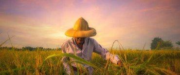 Pelajaran Penting Dari Petani Saat Hadapi Masa Sulit